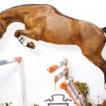 Crivelli_CarpaccioFoal