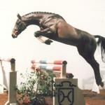 Lasino_jump1