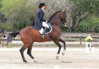 icon_horses