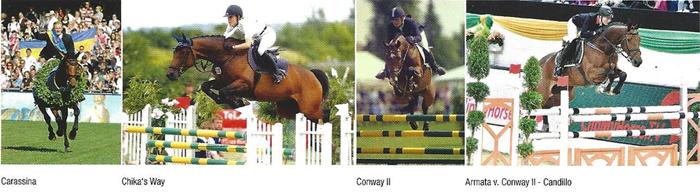 Conway II Stallion Horse Fox Fire Farm